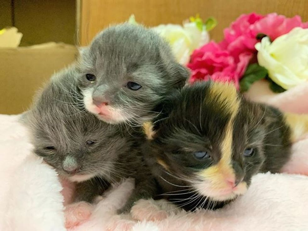 kittens, cute