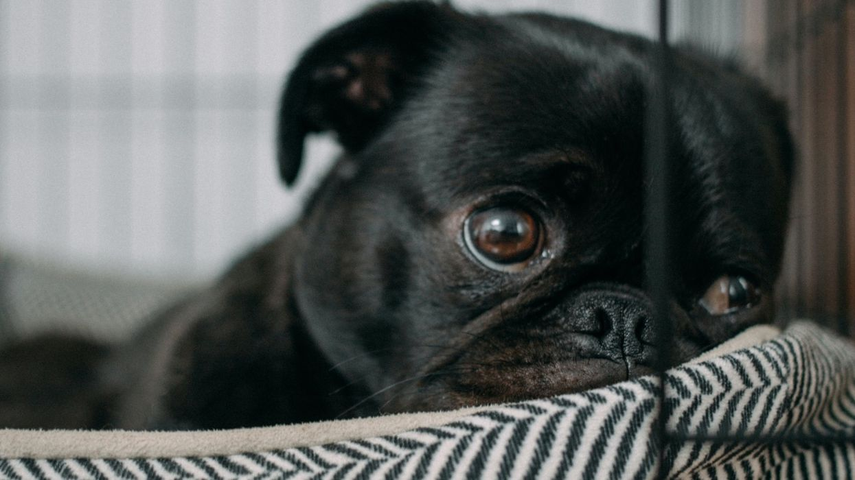 Preparing your pet for the end of quarantine