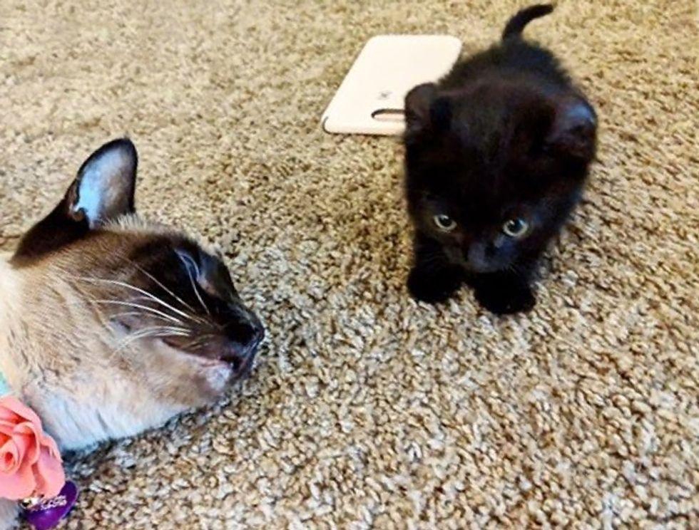 kitten, cat, tiny
