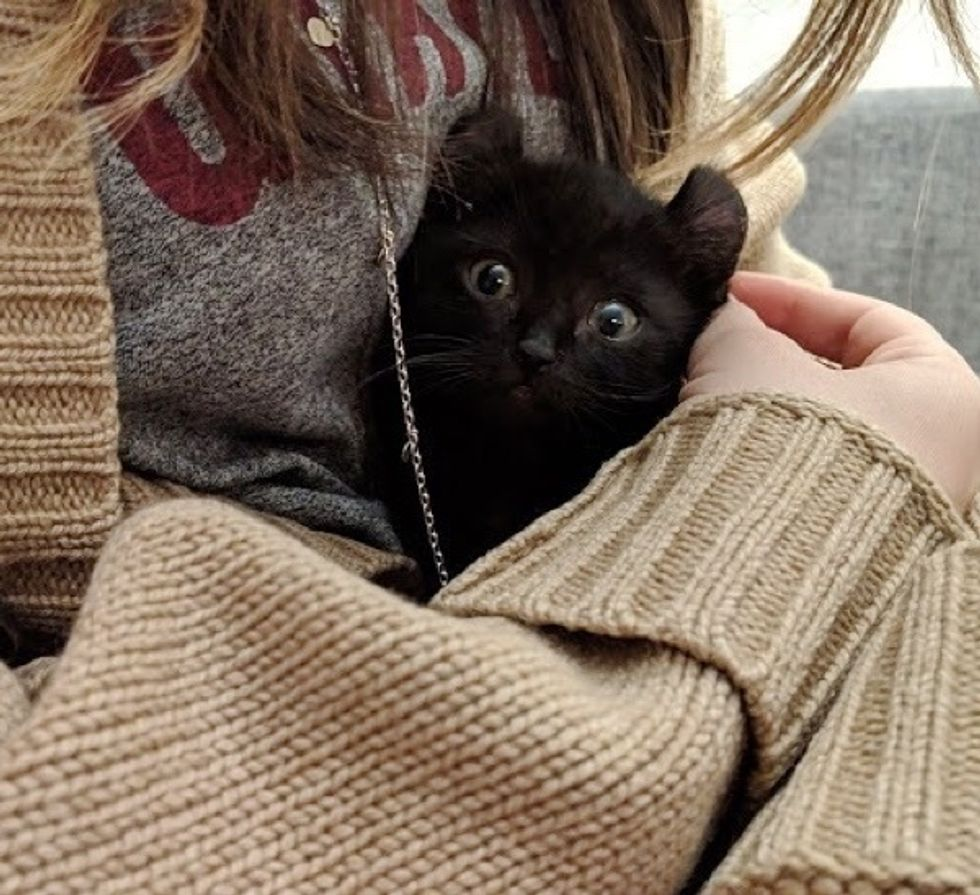 kitten, cute, curly ears