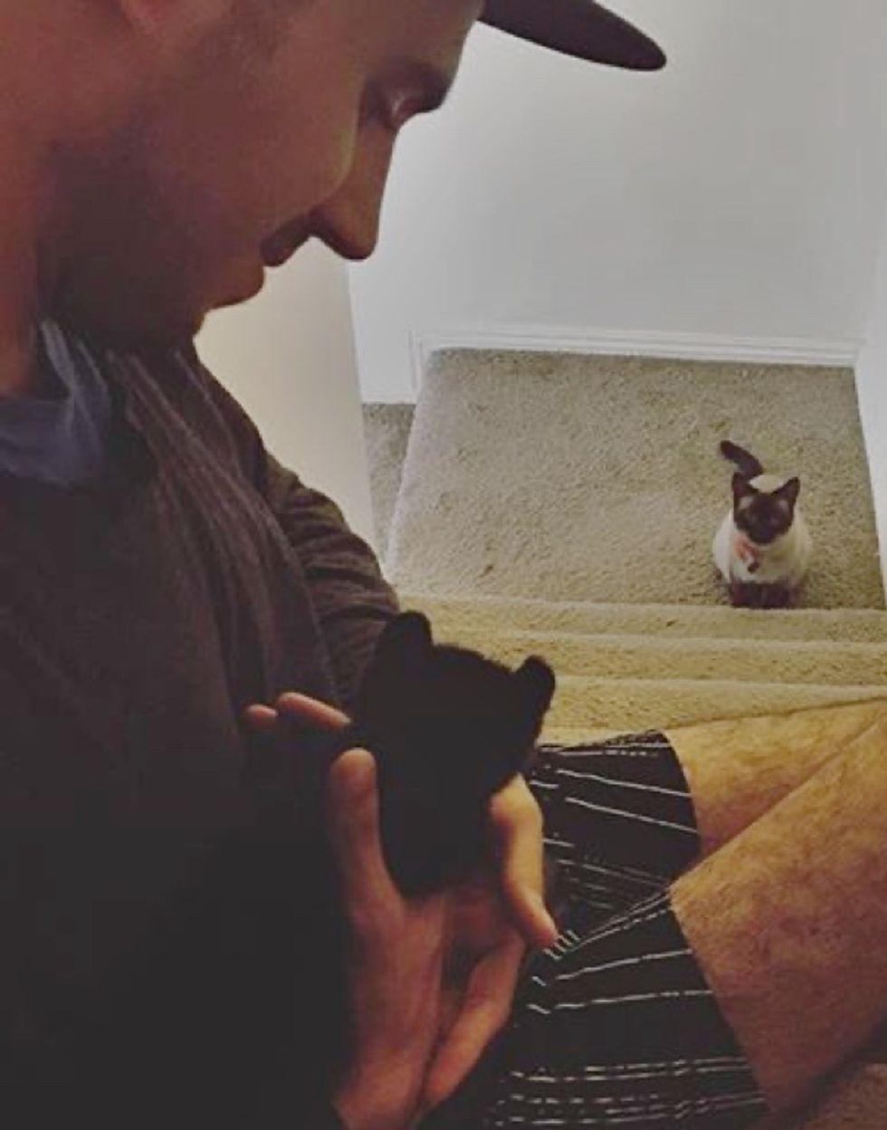 cat, cute, meeting