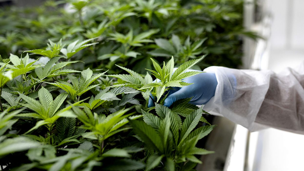 Coronavirus: The Tide Is Coming for Medicinal Cannabis