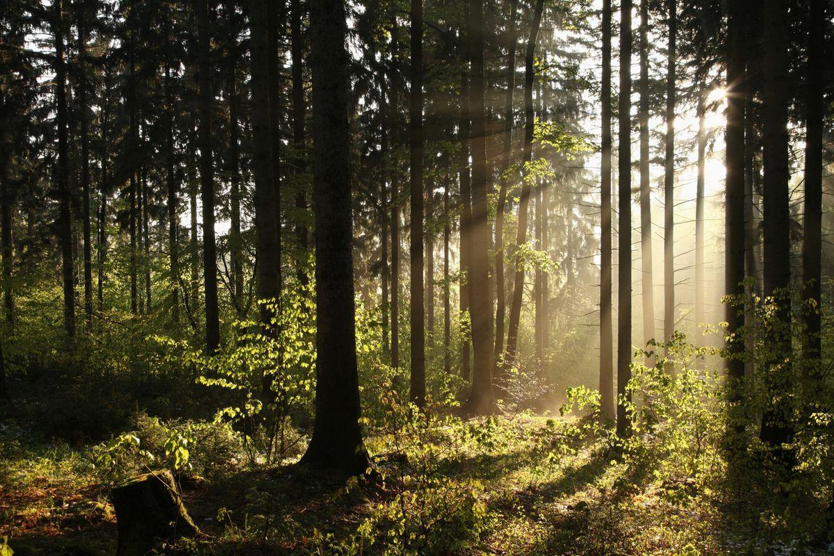 Il bosco insegna a cibarsi con parsimonia