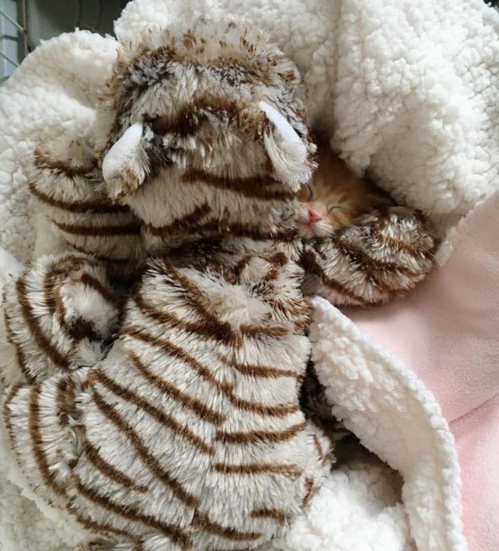 kitten, cuddle, cute
