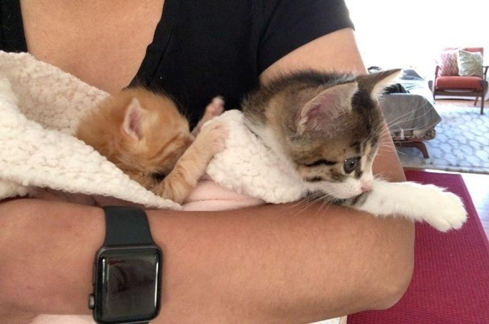 cuddles, kittens, cute