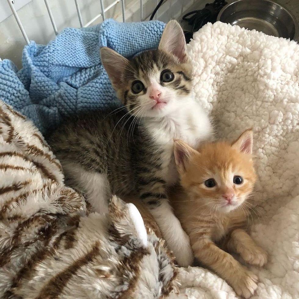 cuddles, kittens, cute, best friends