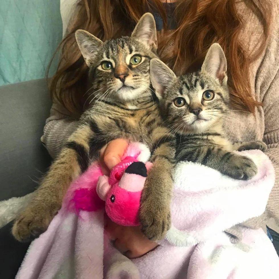tabby, kittens, best friends