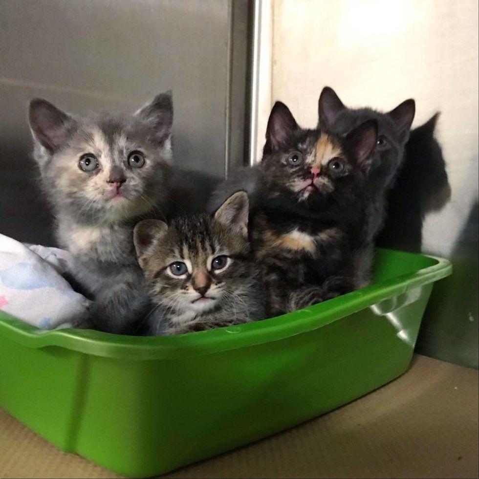 rescue, kittens, shelter