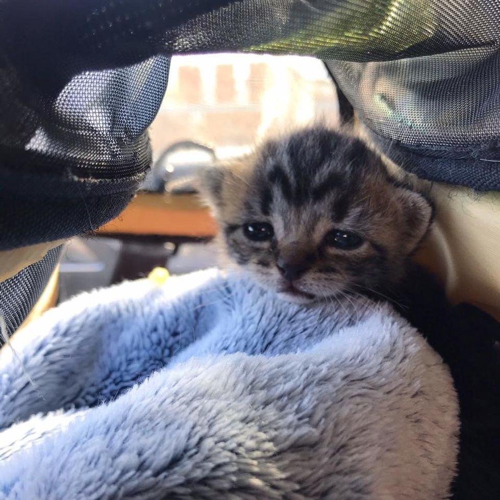 cute, kitten