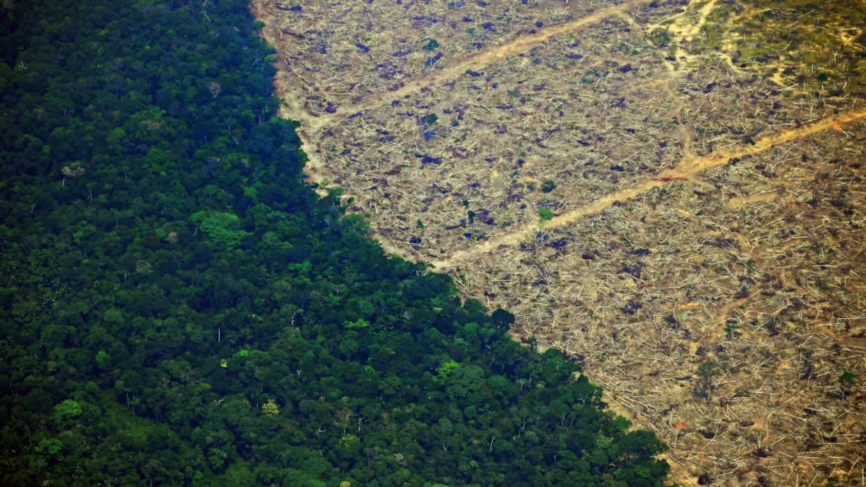 Deforestation in the Brazilian Amazon Increases for 13th Consecutive Month