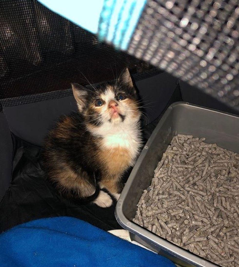 kitten, car wash, stray