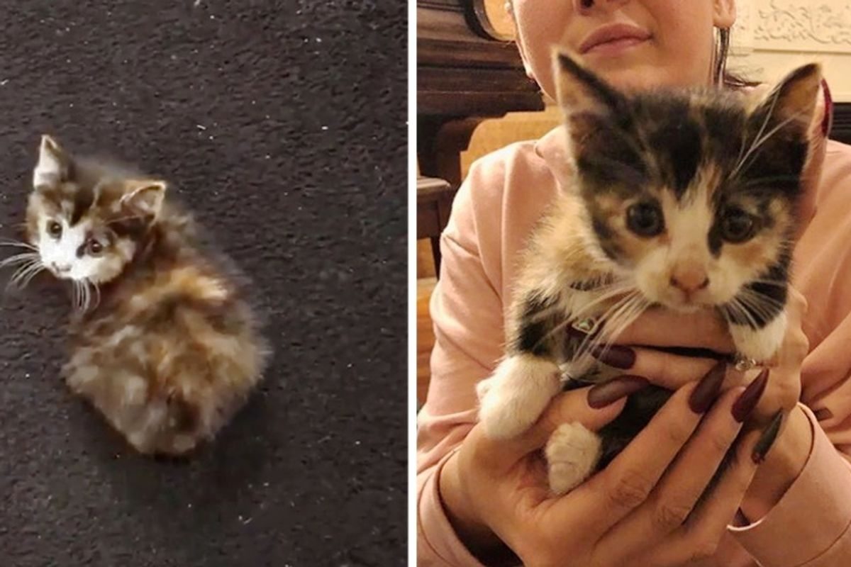 Stray Kitten Sneaks into Car Wash During Pouring Rain