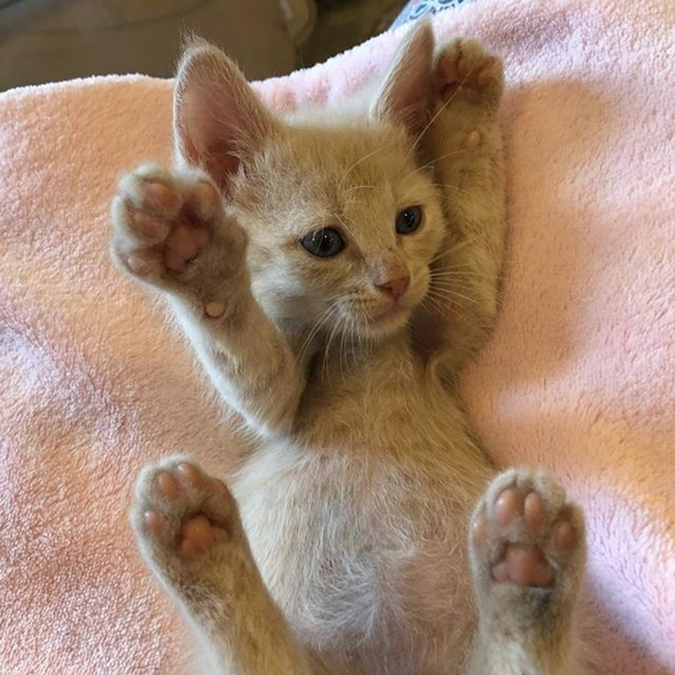 cute, kitten, ginger, paws