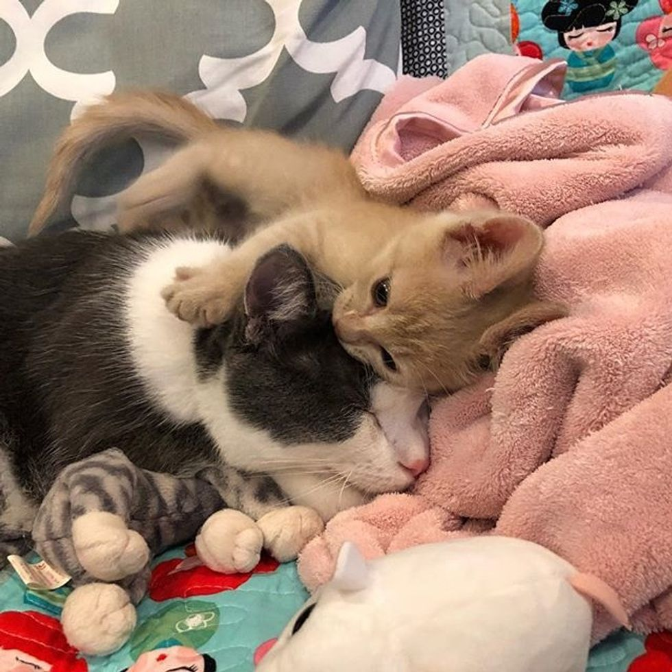 cute, kitten, cat, best friends, hug