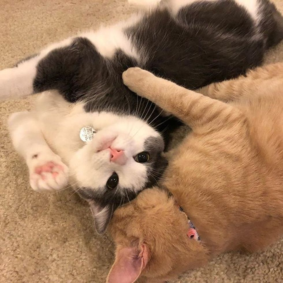 cute, cats, best friends, hug