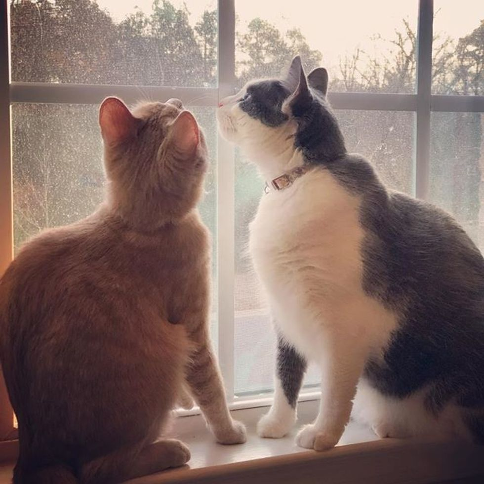 cute, cats, best friends, window, bird tv