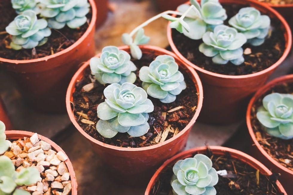 7 Reasons Succulents Are 100 Percent An Essential Purchase For Quarantine Life