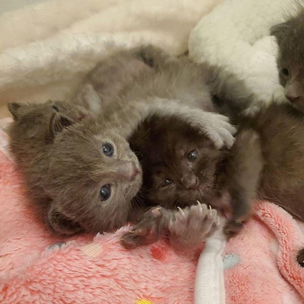 cute, kittens, cuddles