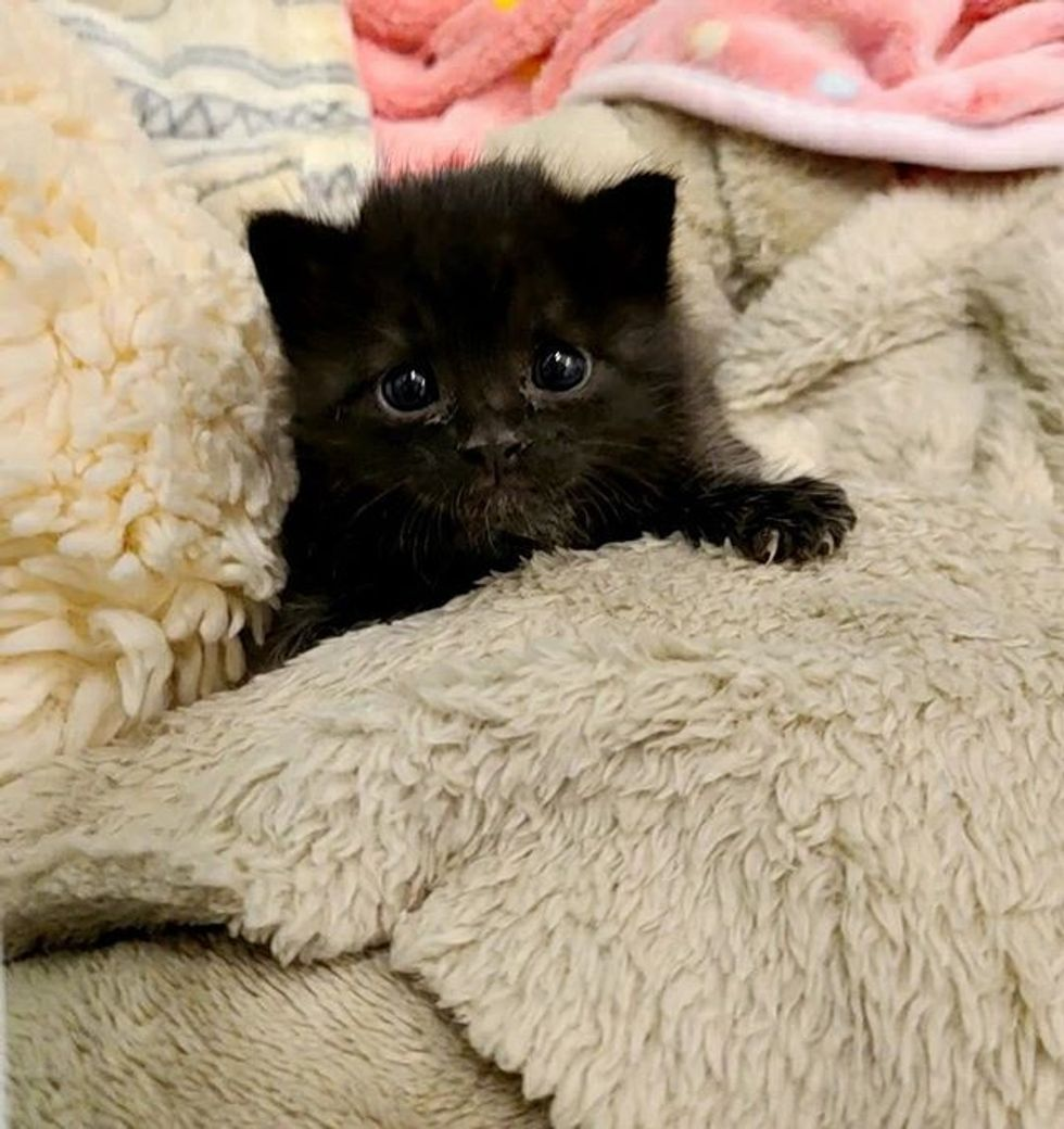 cute, kitten, panther kitty