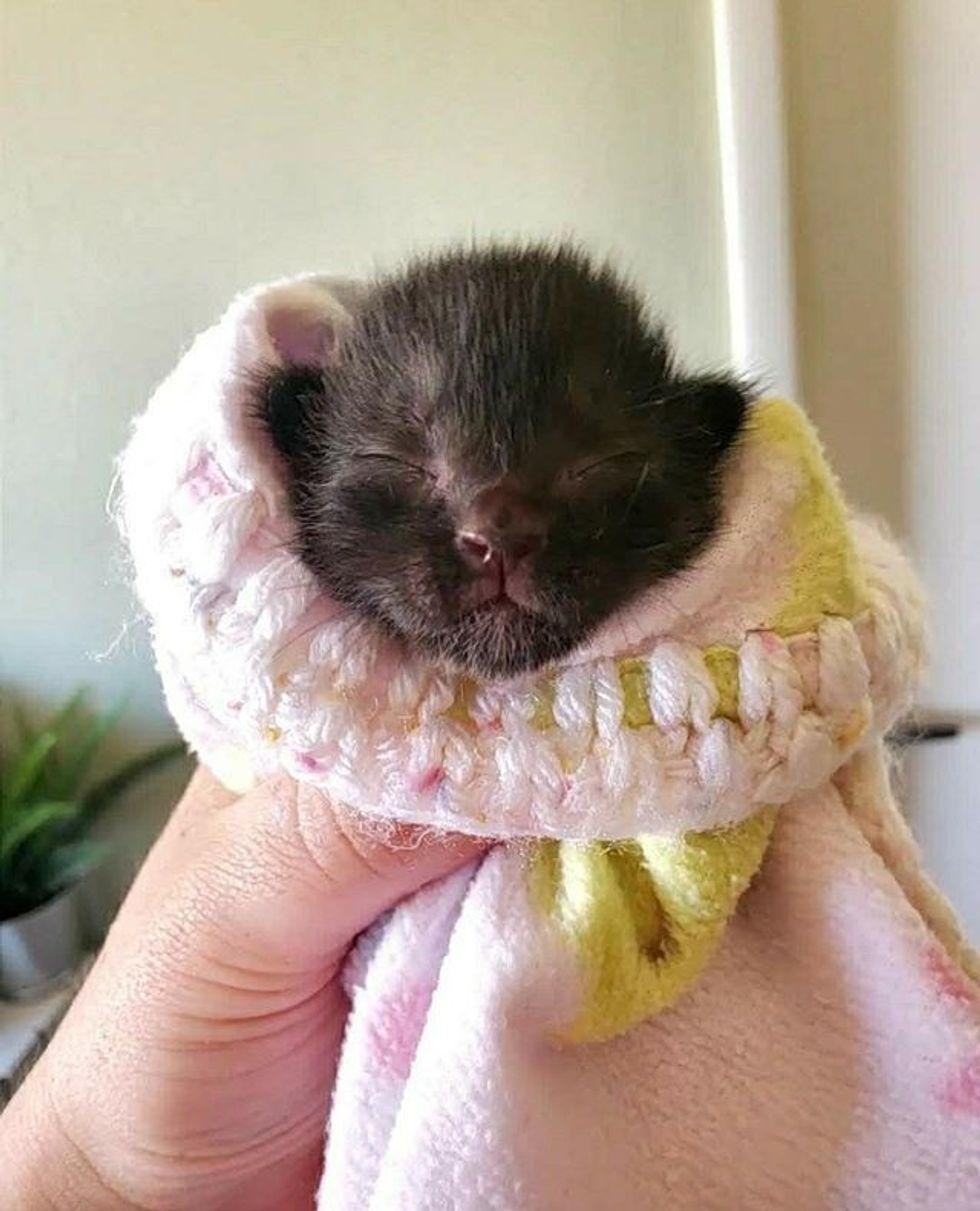 cute, kitten, purrito