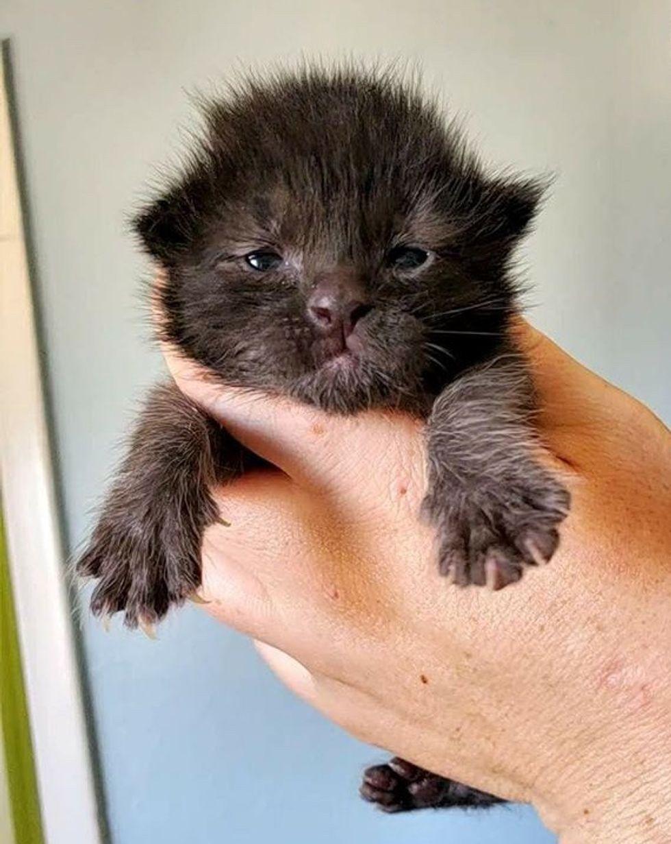 cute, kitten, paws