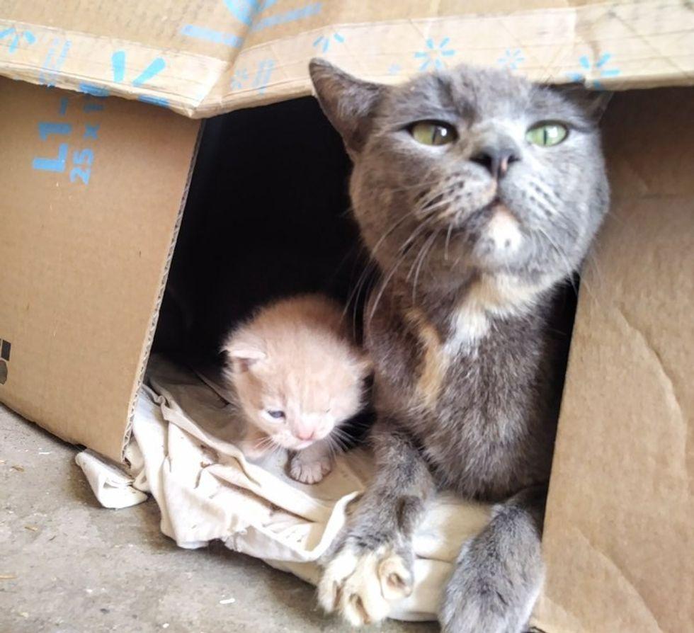 stray cat, cat mom, kitten