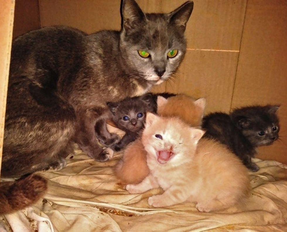 stray cat, kittens, one eye, cleft lip