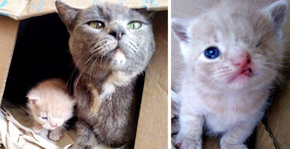 Stray Cat Takes Rescuers to Her Kittens - One of Them Has a Permanent Wink