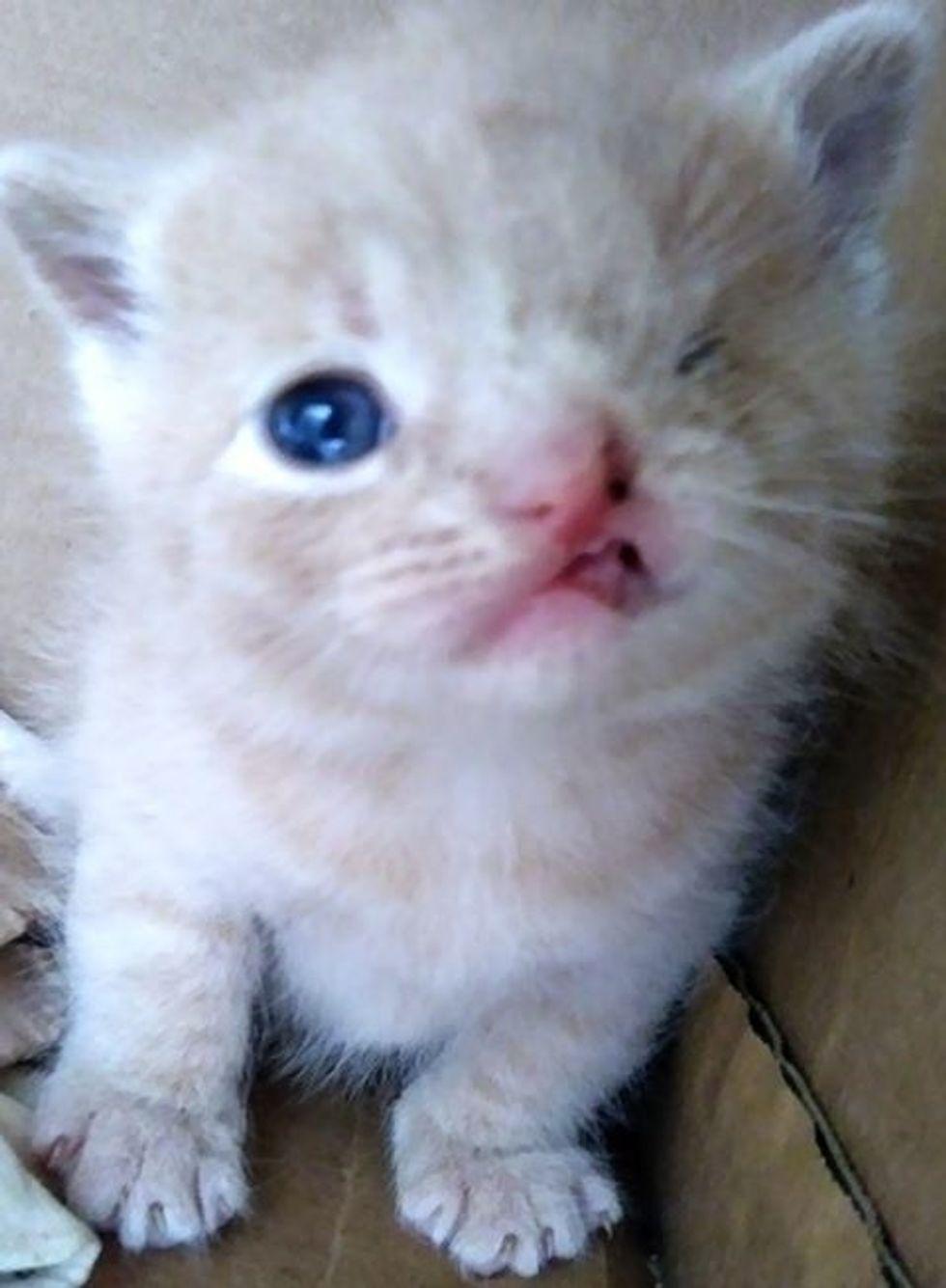 cute, kitten, cleft lip, one eye, wink