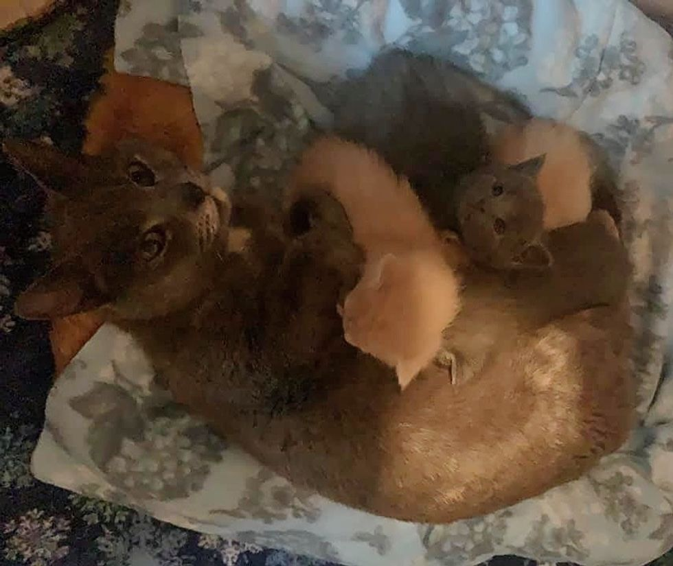 cat mom, cute, kittens, snuggles