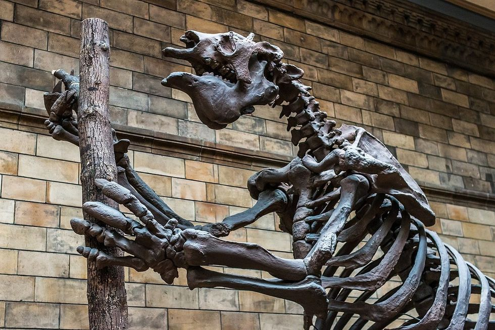 Is poop-filled drinking water what killed ancient giant sloths?