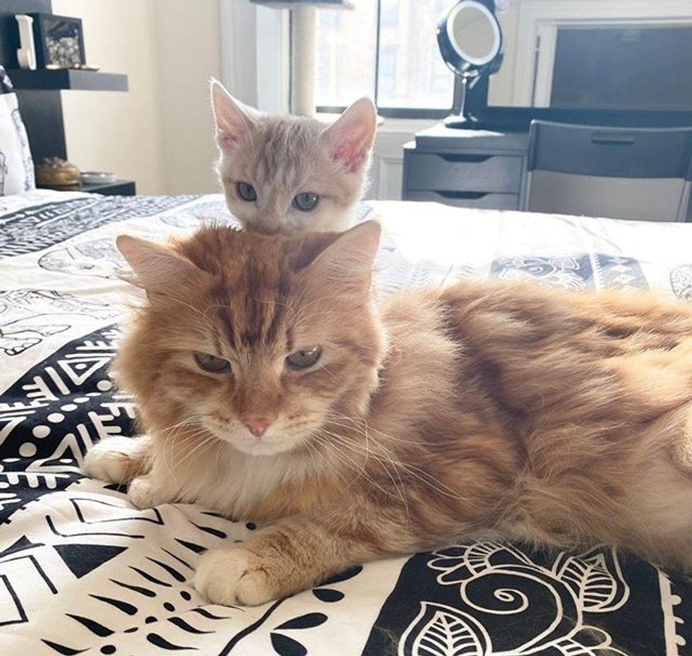 cute, kitten, cat, best friends