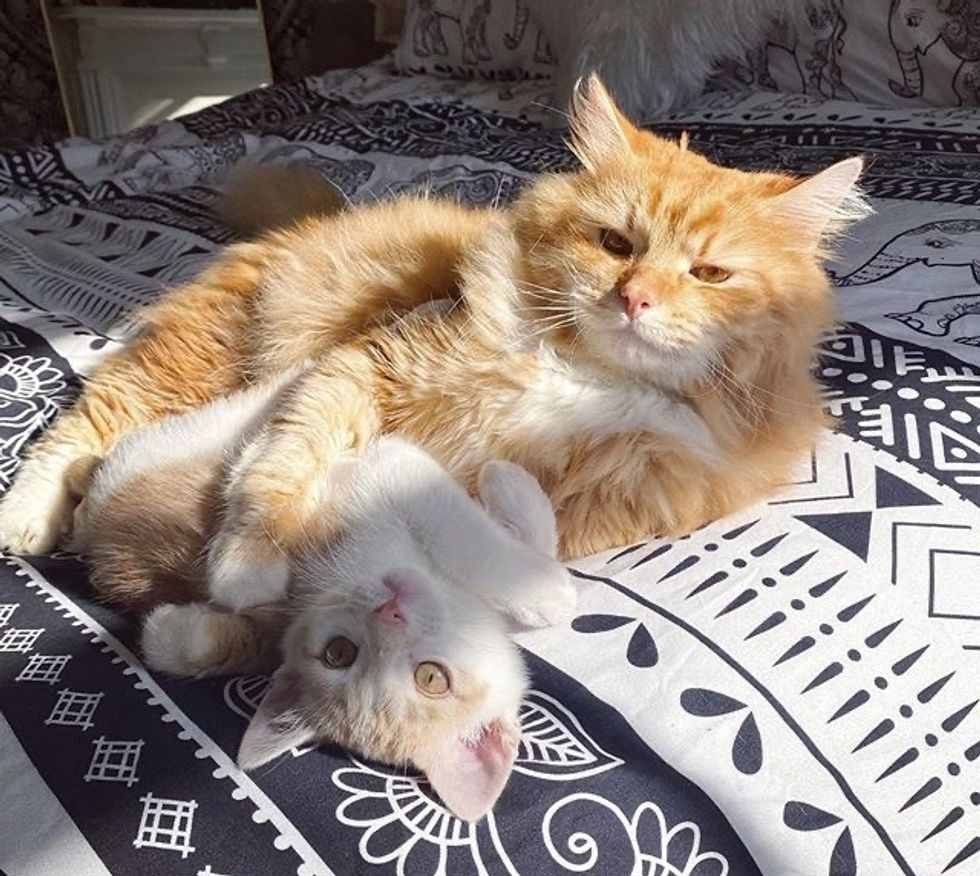 cute, kitten, cat, best friends, cuddles