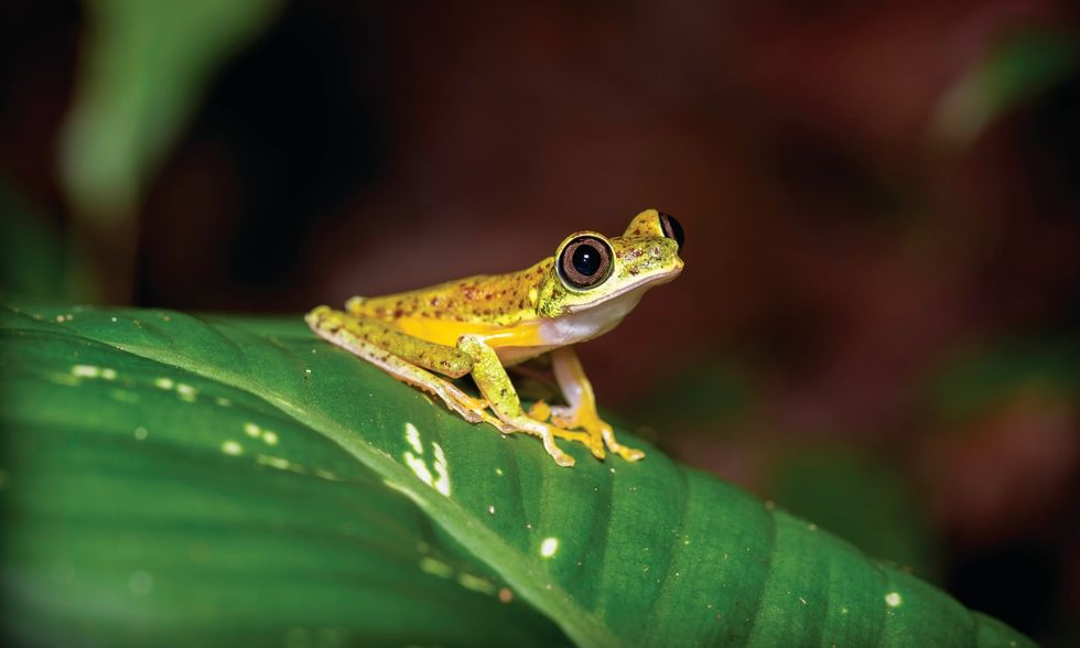 10 Endangered Animals to Weep Over