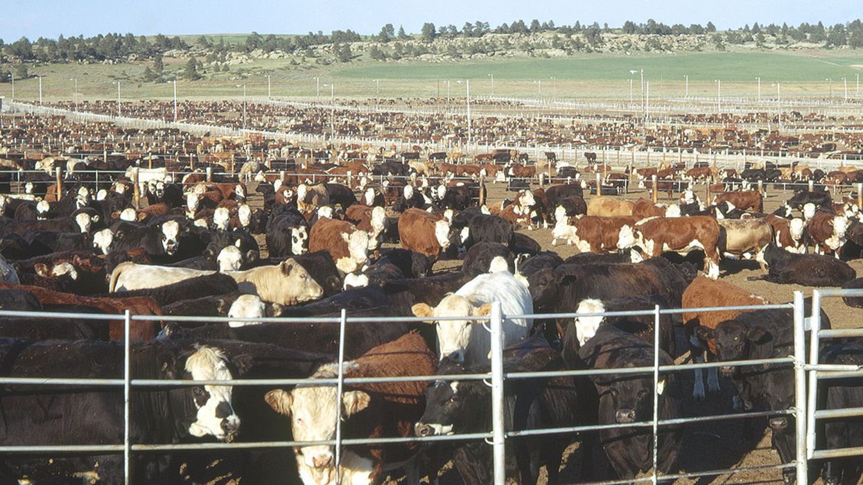 Antibiotics: Big Ag's Can of Worms