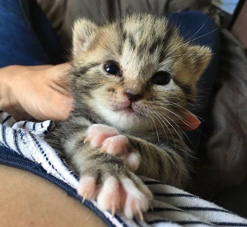 cute, kitten, tabby, cuddles