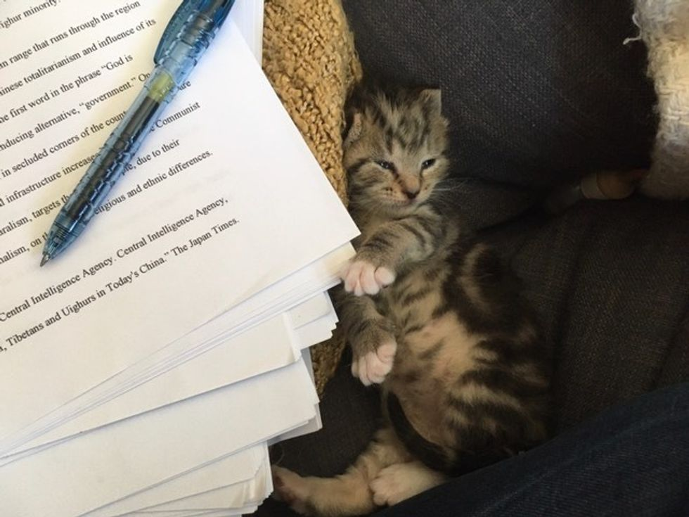 cute, kitten, tabby, work, office, sleeping