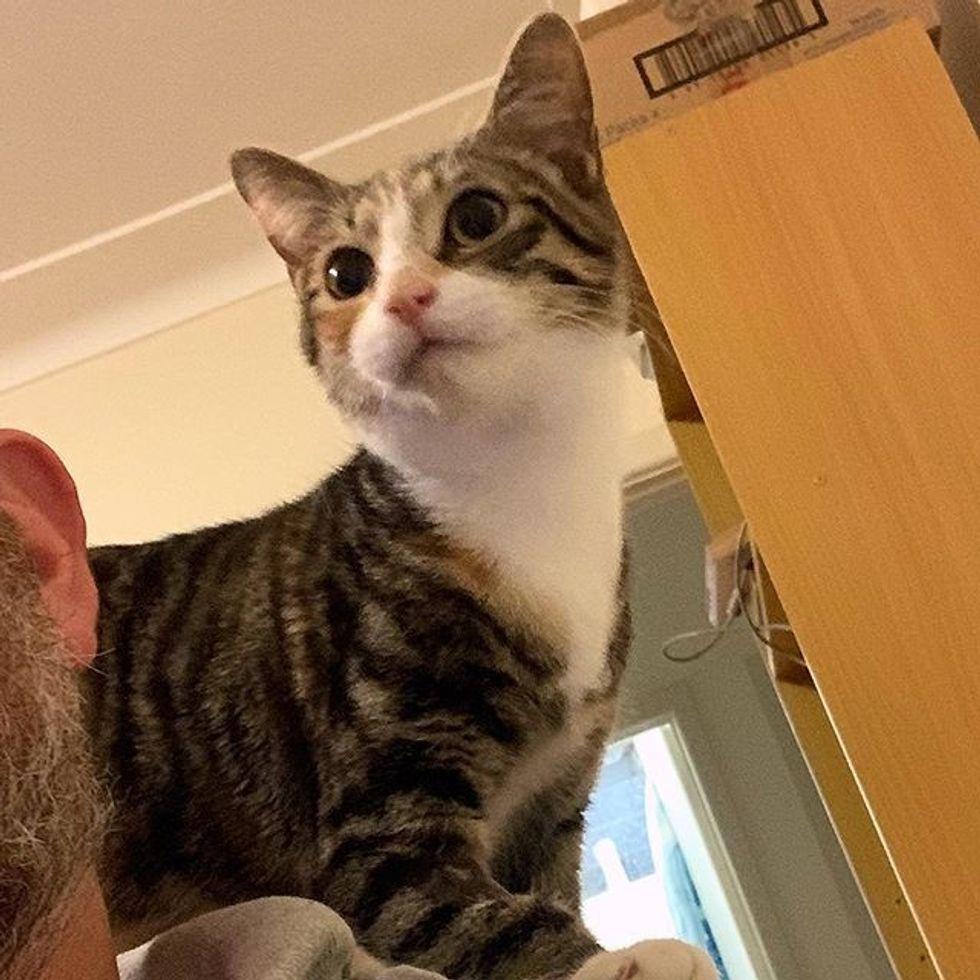 cute, cat, shoulder
