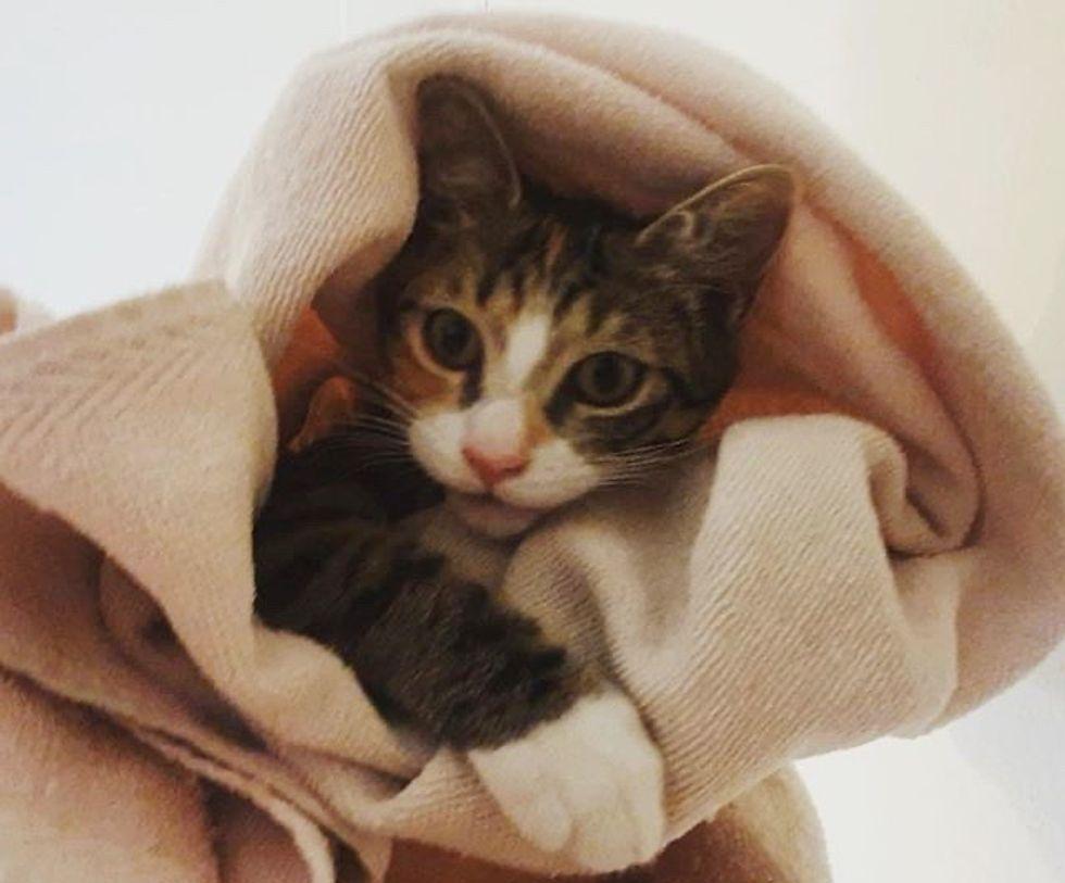 cute, cat, towel