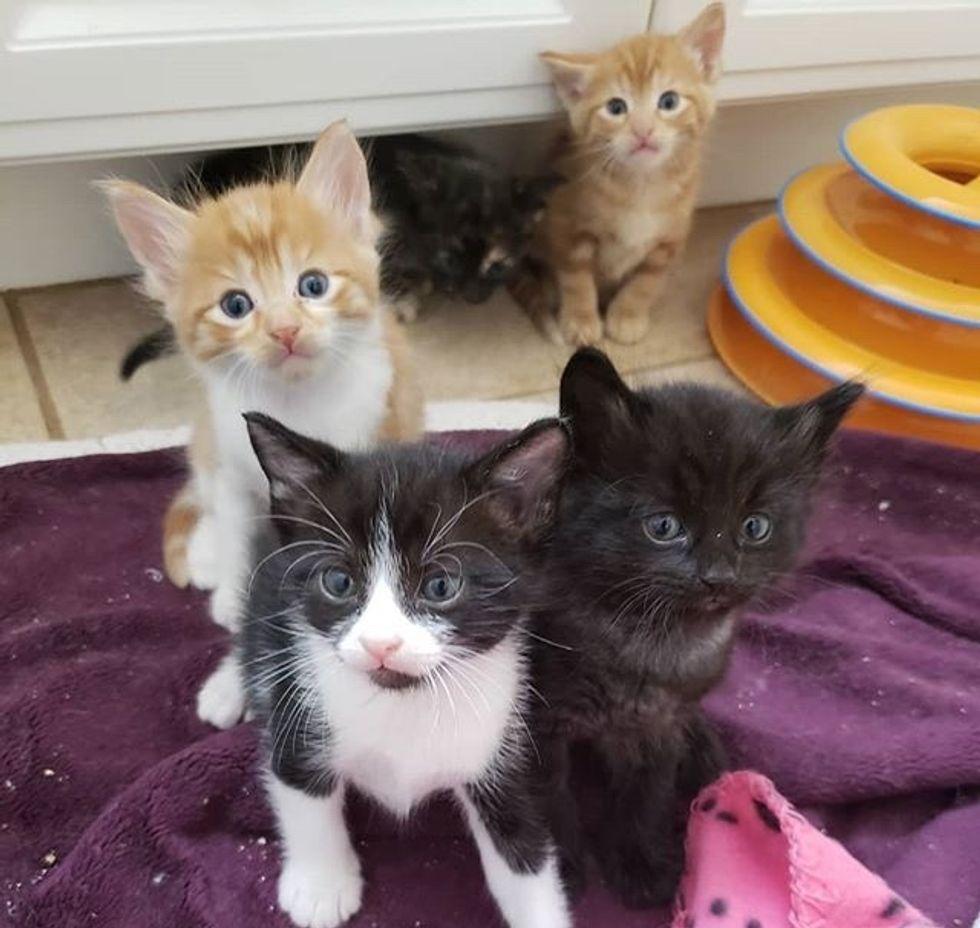 cute, kittens
