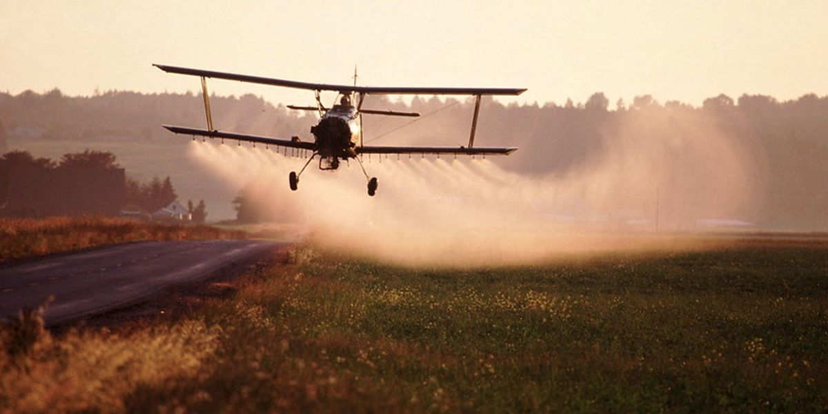 US EPA forced to decide this month on pesticide's fate