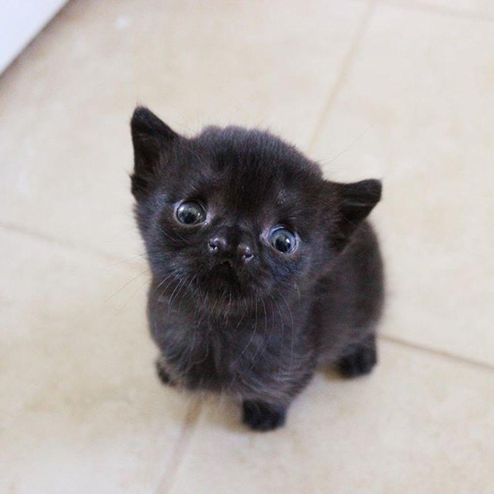 cute, kitten, cleft, nose