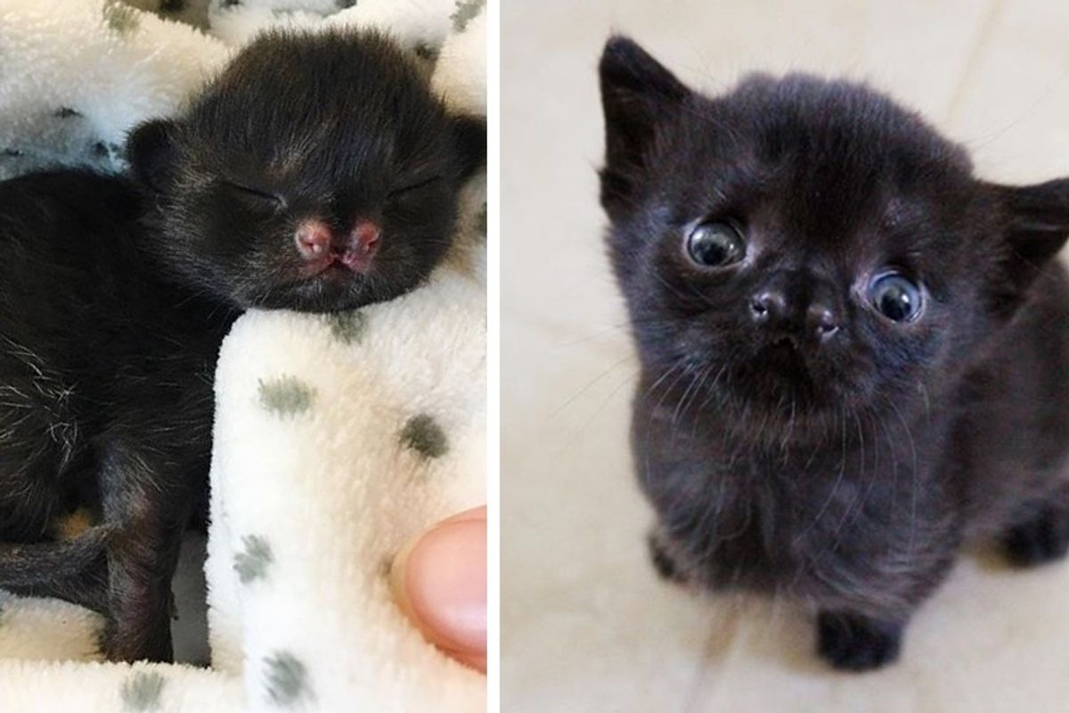 Kitten with Cutest Nose is Thriving After She Was Found in Backyard