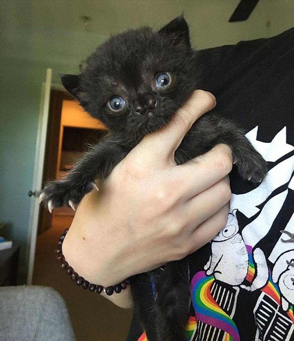 cute, kitten, cleft, nose, claw