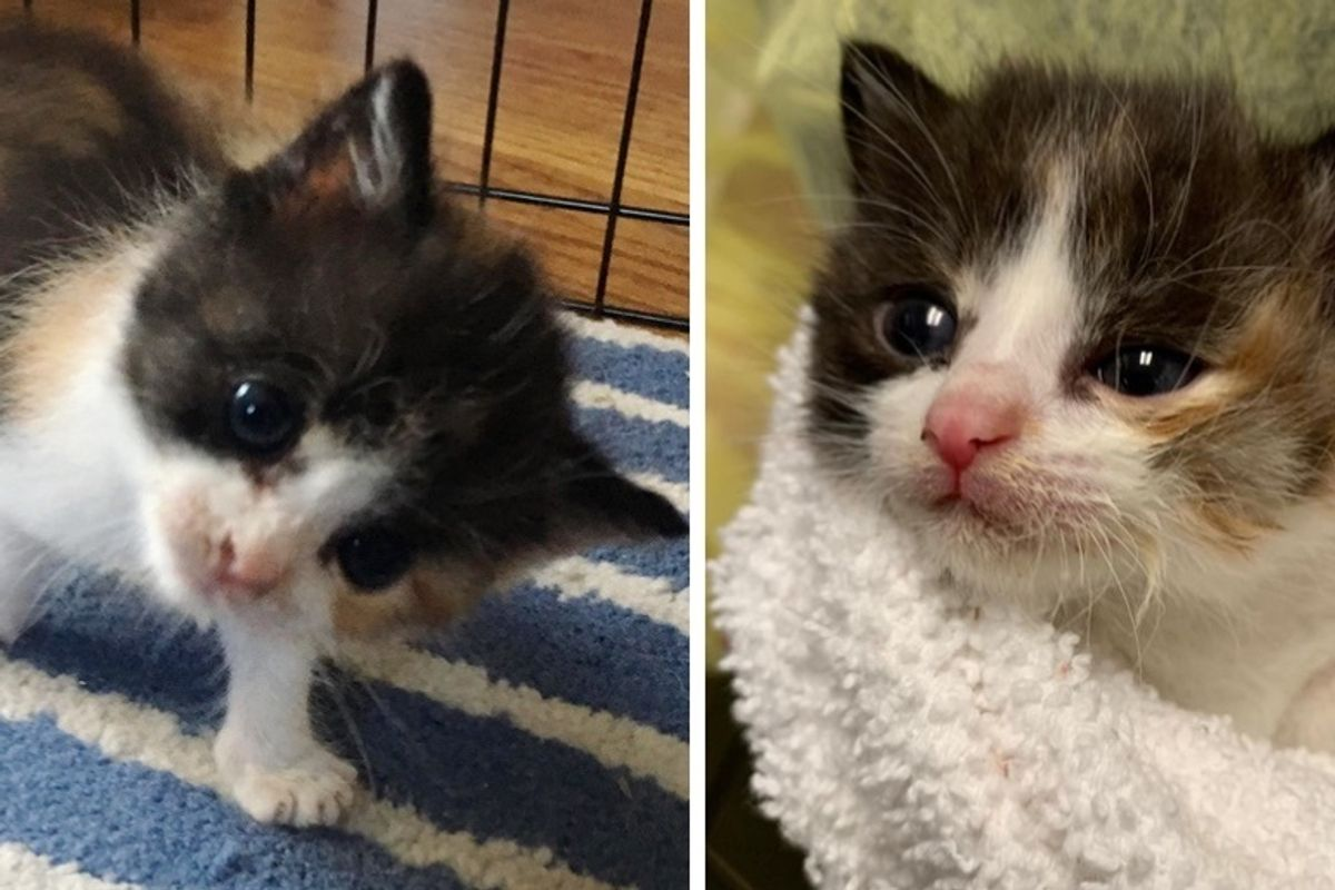 Kitten with Head Tilt Makes Great Strides and Tells Everyone About It