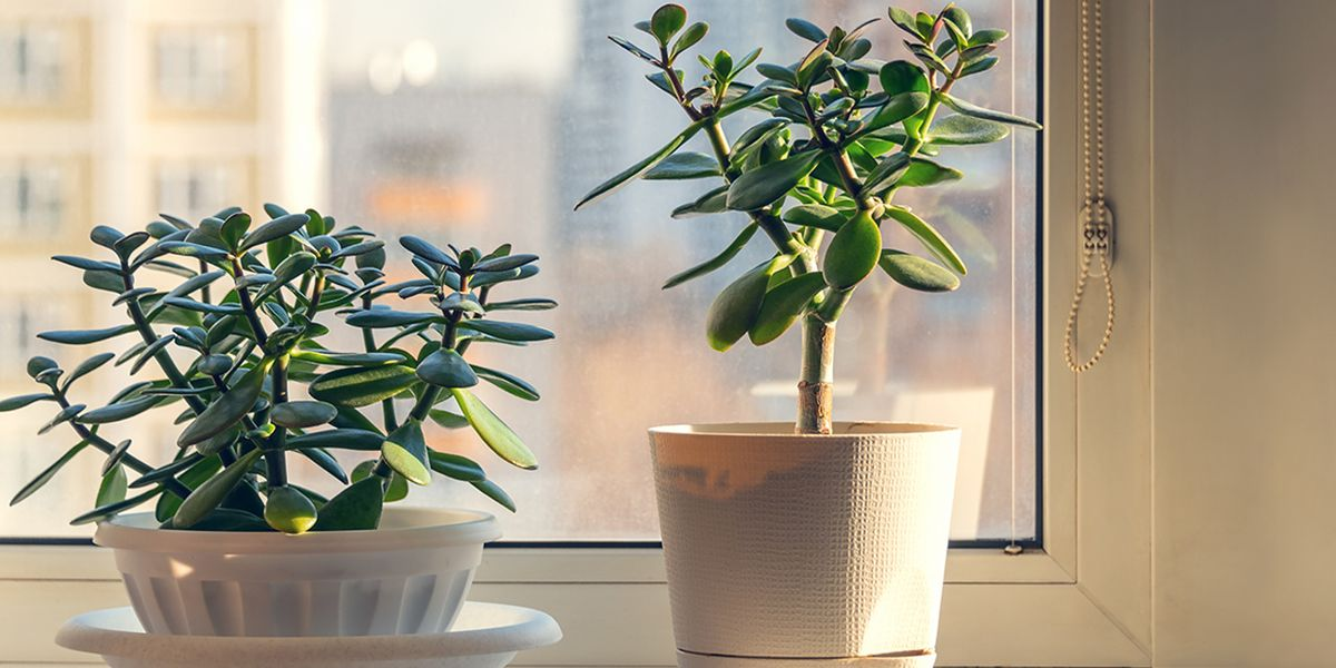 12 Houseplants to Refresh Dry Indoor Air