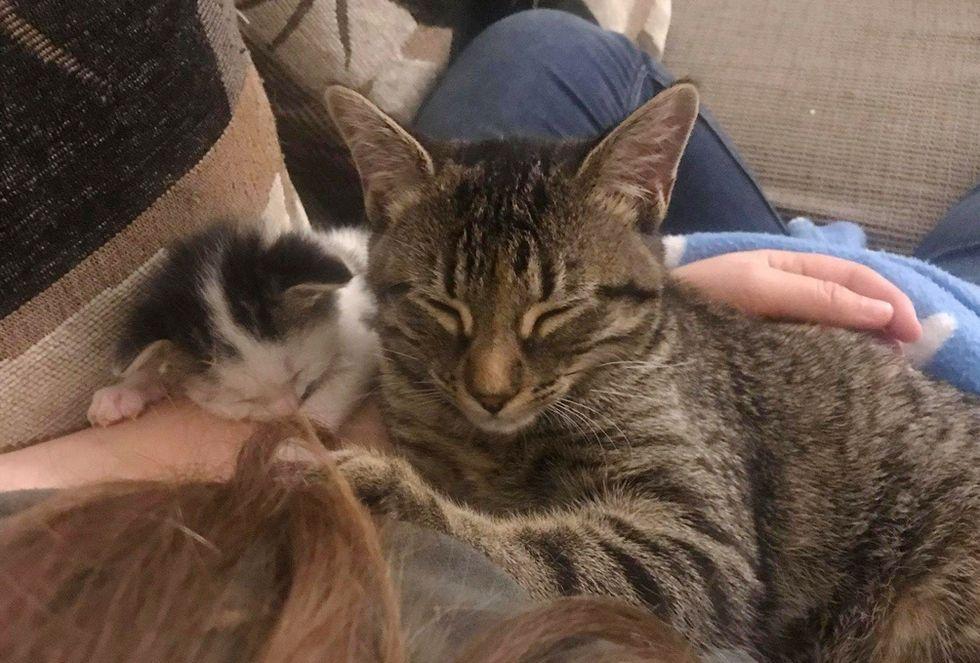 tabby cat, kitten, cuddle friends