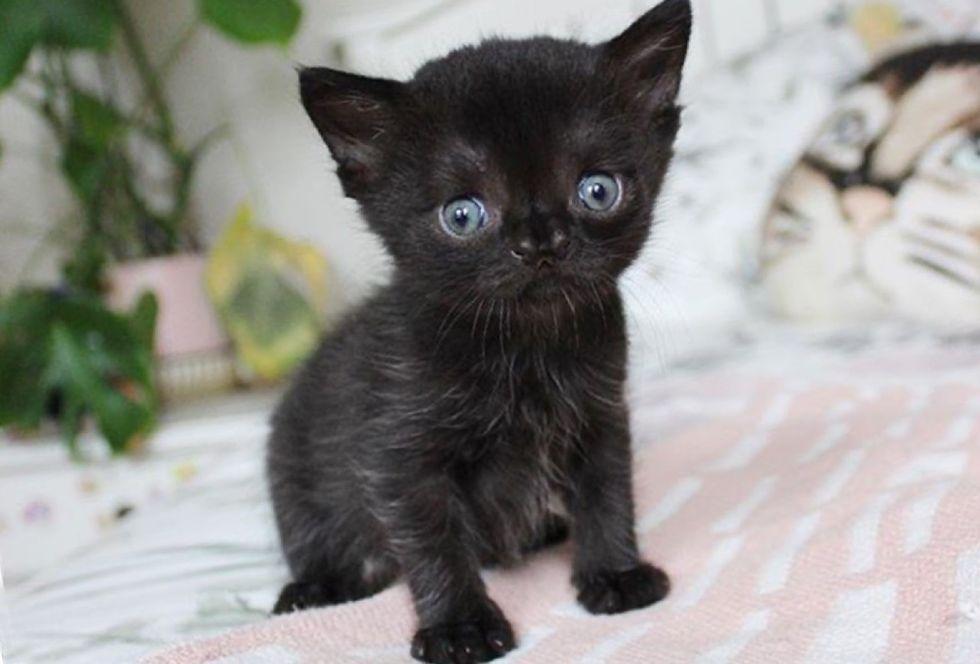 special, nose, kitten, Aela