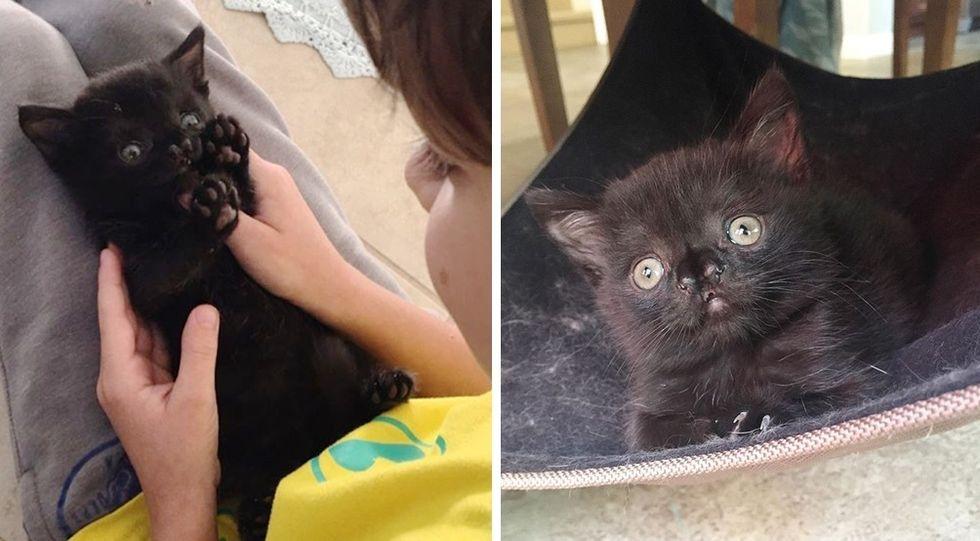 cute nose, kitten, Aela, hug, personality