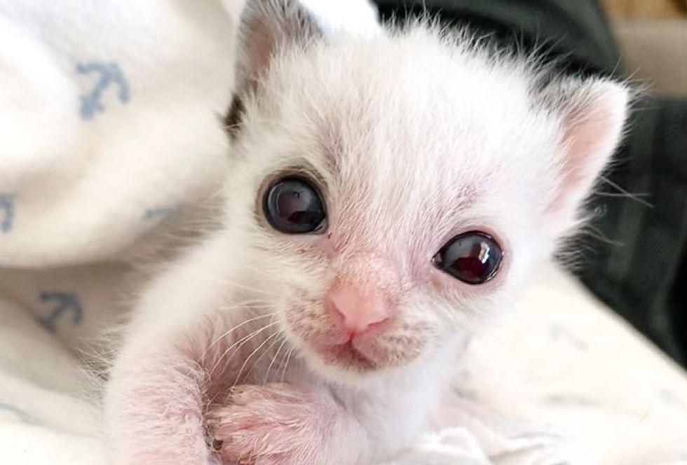 small kitten, big eyes